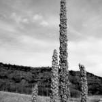 'Grassy-cacti' by Ania Owczarczyk