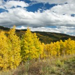 On route to Denver from Cortez, CO via the High Country. Golden Quaking Aspens! <i>Photo by Ania Beata Owczarczyk.</i>